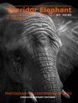 E-Magazine Corridor Éléphant N°11