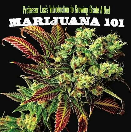 Marijuana 101: Everything You Need to Know