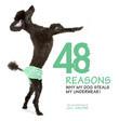48 Reasons why my dog steals my underwear!