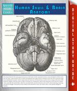 Human Skull And Brain Anatomy (Speedy Study Guide)