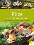 Pilze selbst anbauen