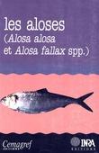 Les aloses (Alosa alosa et Alosa fallax spp.)