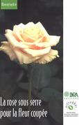 La rose sous serre pour la fleur coupée