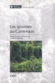 Les ignames au Cameroun