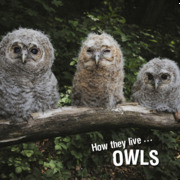 How the live... Owls