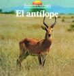 El antílope