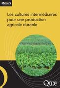 Les cultures intermédiaires pour une production agricole durable