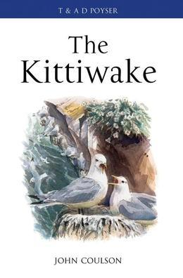 The Kittiwake