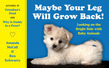 Maybe Your Leg Will Grow Back!: Looking on the Bright Side with Baby Animals