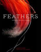 Feathers: Displays of Brilliant Plumage