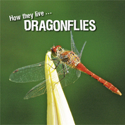 How they live... Dragonflies