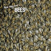 How they live... Bees
