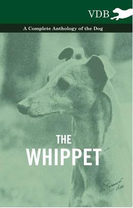 The Whippet - A Complete Anthology of the Dog