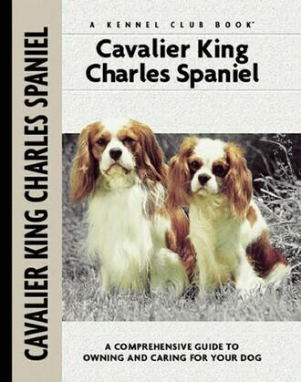 Cavalier King Charles Spaniel