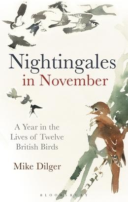 Nightingales in November