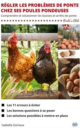 Régler les problèmes de ponte chez ses poules pondeuses