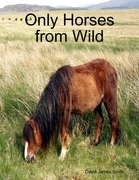 Only Horses from Wild