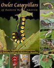Owlet Caterpillars of Eastern North America