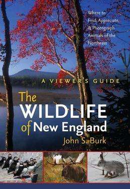 The Wildlife of New England: A Viewer's Guide