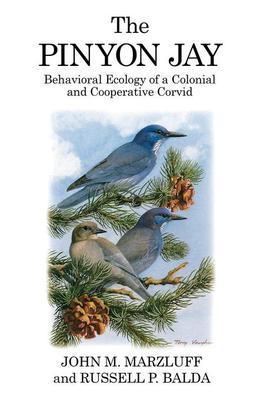 The Pinyon Jay: Behavioral ecology of a colonial and cooperative corvid