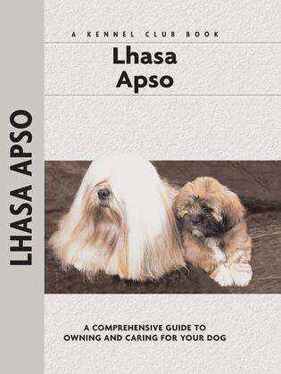 Lhasa Apso