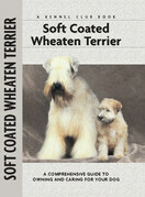 Soft Coat Wheaten Terrier
