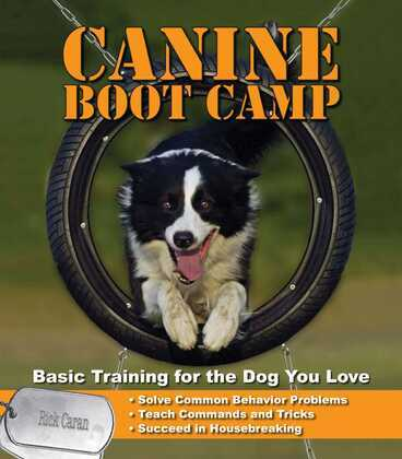Canine Bootcamp
