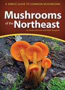 Mushrooms of the Northeast: A Simple Guide to Common Mushrooms