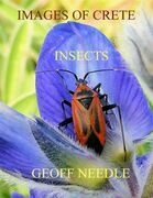 Images of Crete - Insects