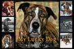 My Lucky Dog