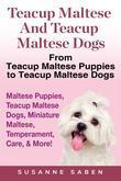 Teacup Maltese and Teacup Maltese Dogs