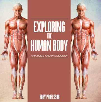 Exploring the Human Body | Anatomy and Physiology