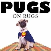 Pugs on Rugs