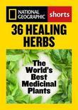 36 Healing Herbs: The World's Best Medicinal Plants