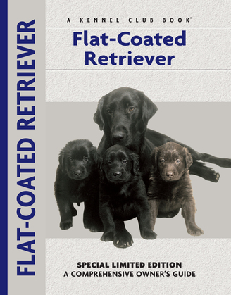 Flat-Coated Retriever