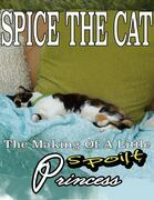 Spice the Cat: The Making of a Little Spoilt Princess