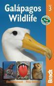 Galápagos Wildlife