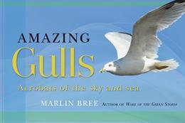 Amazing Gulls: Acrobats of the Sky and Sea