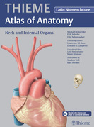 Neck and Internal Organs - Latin Nomencl. (THIEME Atlas of Anatomy)