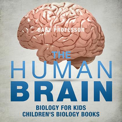 The Human Brain - Biology for Kids   Children's Biology Books