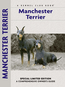 Manchester Terrier