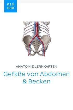 Anatomie Lernkarten: Gefäße von Abdomen & Becken
