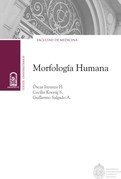 Morfología humana