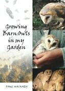 Growing Barn Owls in My Garden