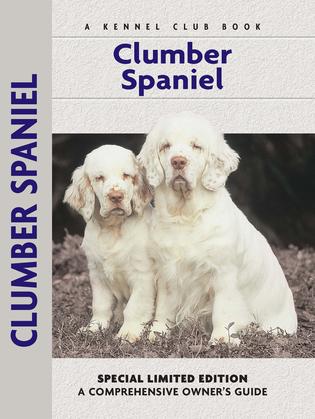 Clumber Spaniel