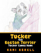 Tucker the Boston Terrier
