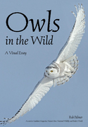 Owls In The Wild