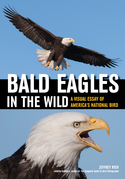 Bald Eagles In The Wild