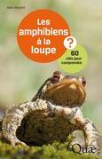 Les amphibiens à la loupe