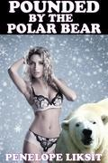 Pounded By The Polar Bear